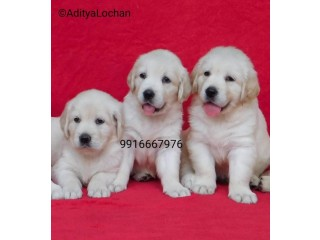 Dogs puppies for sale in india