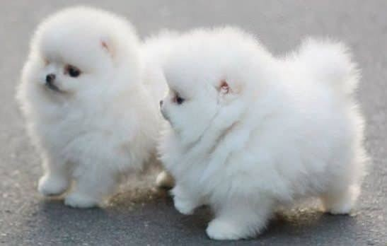 dogs-for-sale-near-me-big-0