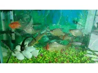 Aquarium fish price in gorakhpur